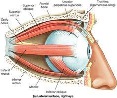 Disturbi muscolari